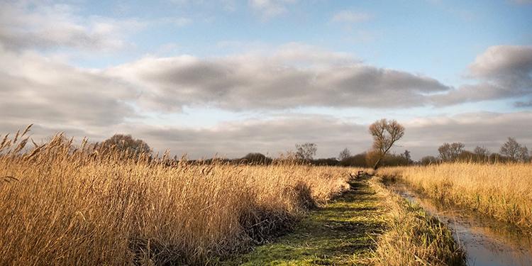 wheatfen autumn
