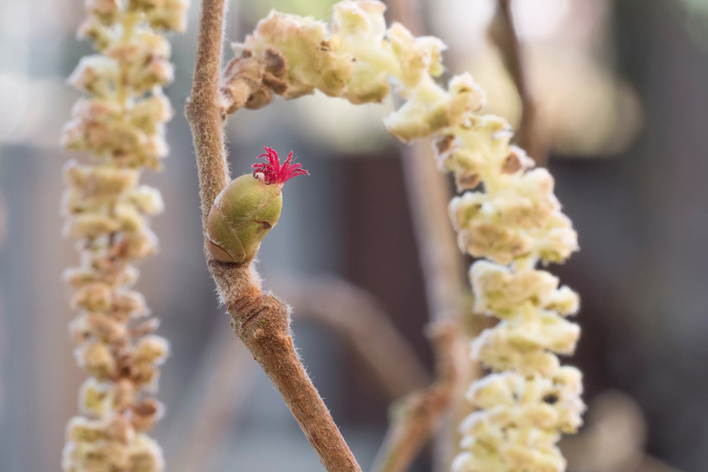 The early signs of spring at Wheatfen