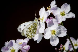 orange tip ann kerridge